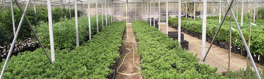 UK Grown quality Hedging Plants available throughout the year at www.hedgingplantsdirect.co.uk